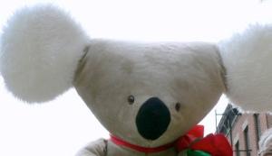 koala38inrose101